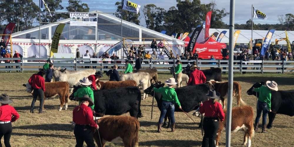 Cow junior handlers