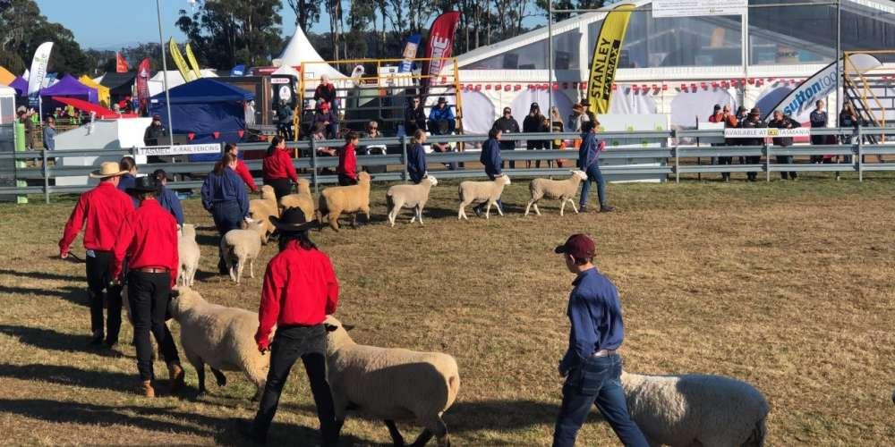 Sheep junior handlers